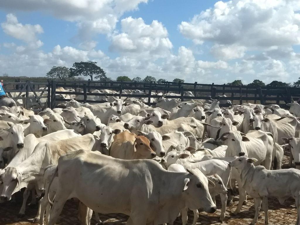 A pecuária e a ocupação do interior do Rio Grande do norte